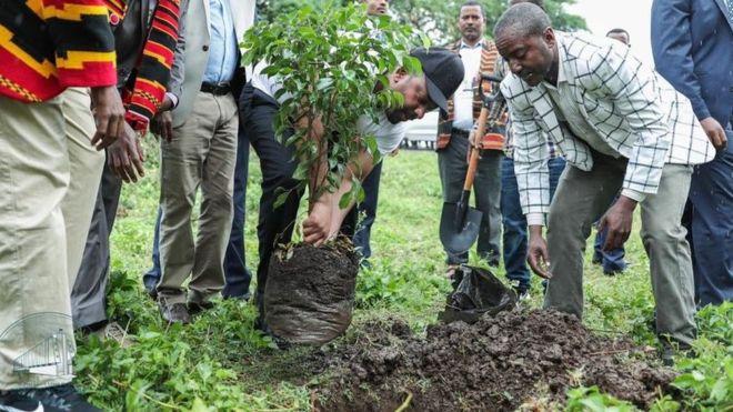 Etiyopya 353 Milyon Fidan Dikimi Yaparak Rekor Kırdı