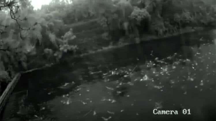 Depremi Öngören Balıklar Görüntülendi
